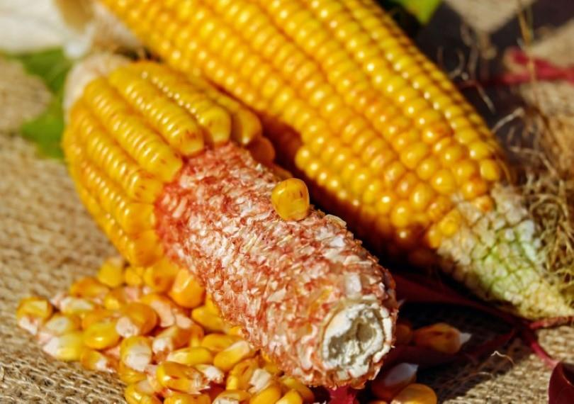楊教授也曾研究以玉米穗軸為原料,製作出環保的有機肥料。(圖/Pixabay)