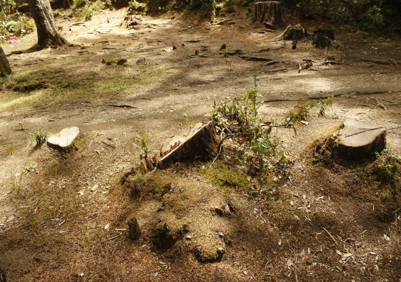 對許多人而言,「砍伐森林會讓該地雨水變少」這樣的推斷似乎並不奇怪。(圖/Pixabay)