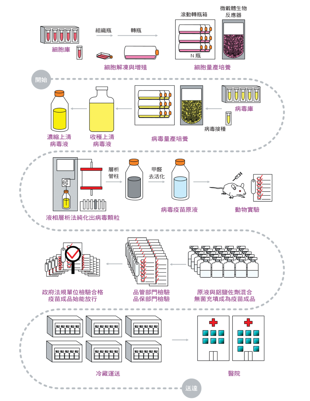 去活化腸病毒 71 型疫苗簡要生產流程
