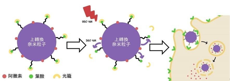 近紅外光光靶向上轉換奈米粒子癌症治療之示意圖