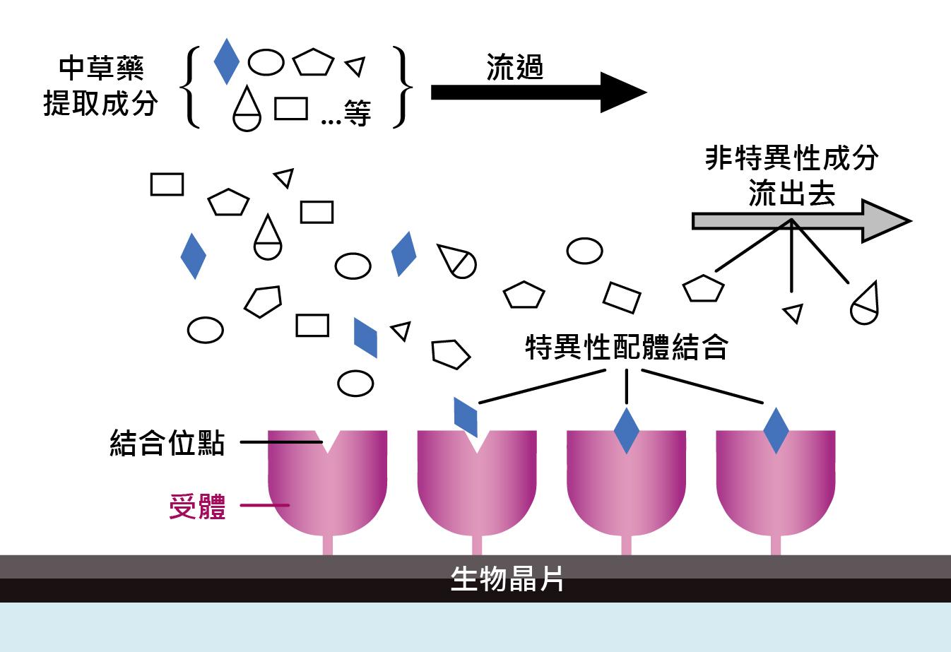 晶片固定化蛋白質動態擷取示意圖